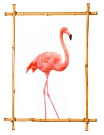 flamenco-rosa